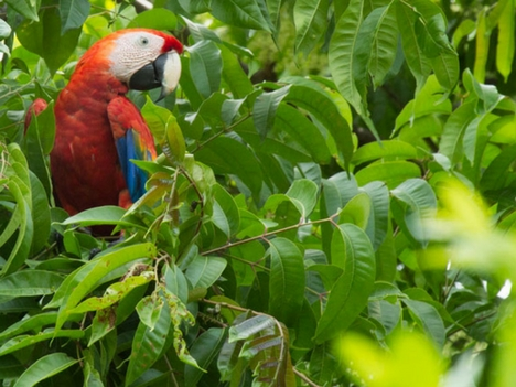Explore Esterillos Costa Rica - Parrots and Wildlife
