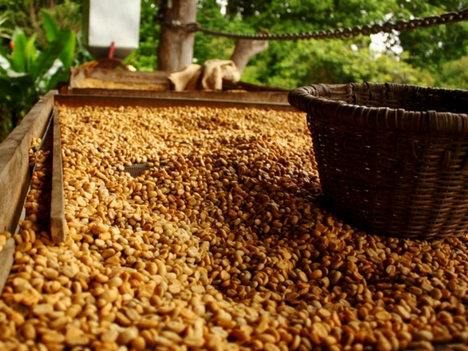 Explore Heredia Coffee Tours, Costa Rica