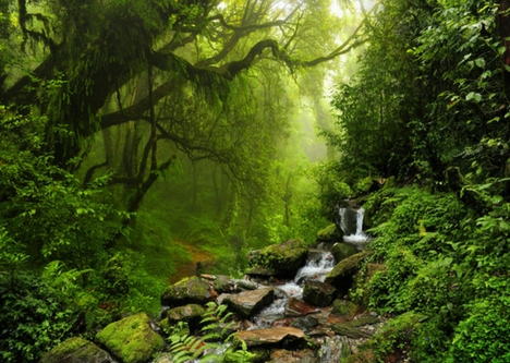 Explore Monteverde Cloud Forest, Costa Rica