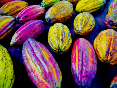 Explore Monteverde Cacao Farms, Costa Rica