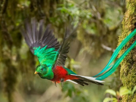 Explore Monteverde Wildlife - Birds of Costa Rica