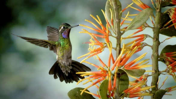 Explore Monteverde Wildlife Tours, Costa Rica