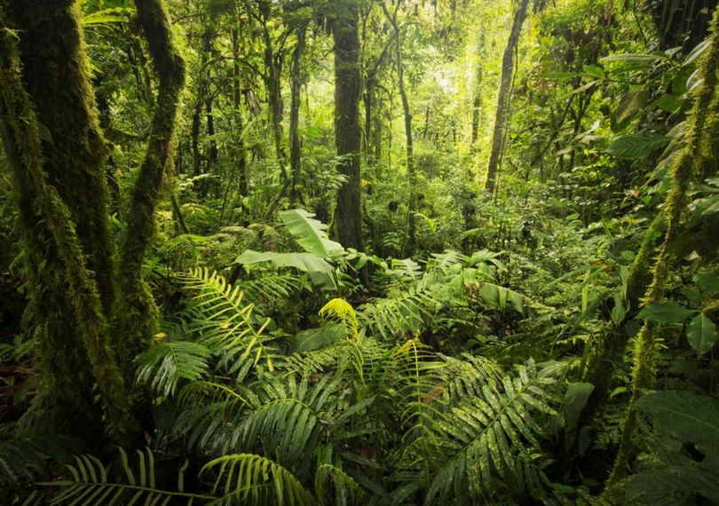 Explore Monteverde Cloud Forest of Costa Rica