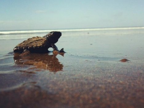 Explore Playa Hermosa Sea Turtles Costa Rica