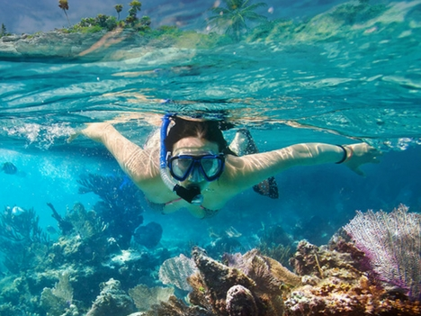 Explore Playa Ocotal Snorkel Dive Tours Costa Rica