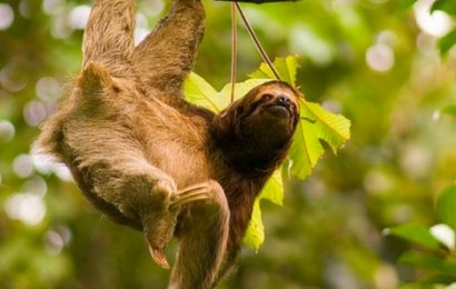 Explore Playa Samara Sloths Costa Rica