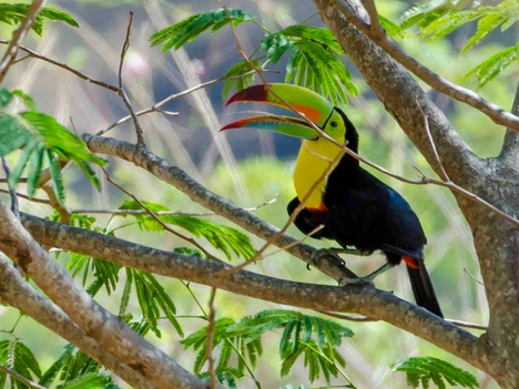 Explore Atenas Wildlife - Toucans, Costa Rica