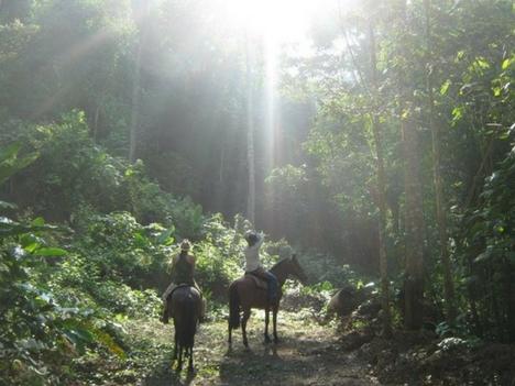 Explore Esterillos Costa Rica Horse Tours