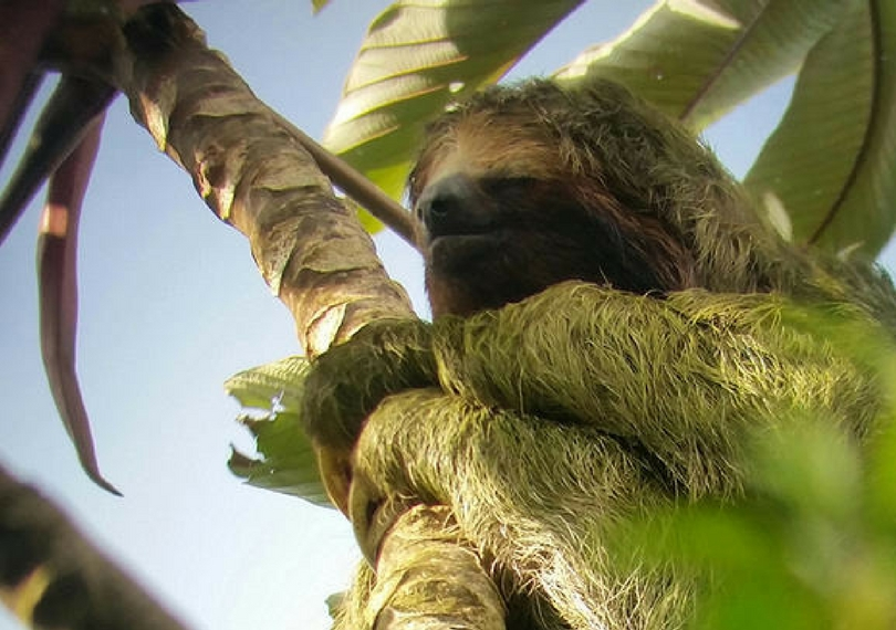 Explore La Fortuna Sloths Costa Rica
