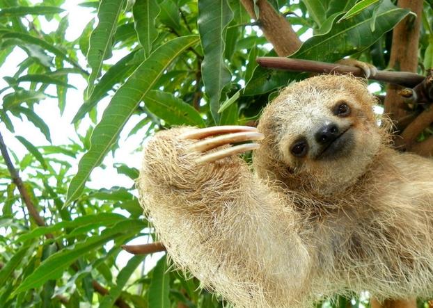 Explore Manuel Antonio Park Sloth Costa Rica