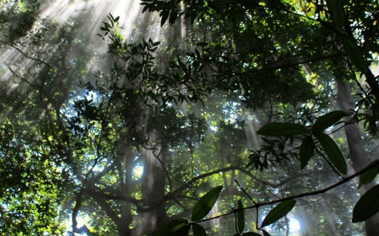 Explore Monteverde Costa Rica