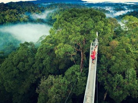 Explore Monteverde Aerial Canopy Photos Costa Rica