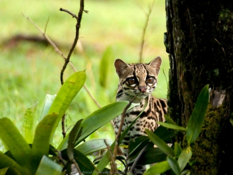 Explore Nuevo Arenal Wild Life Tours Costa Rica