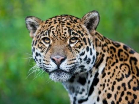 Explore Osa Peninsula Wild life Tours Costa Rica