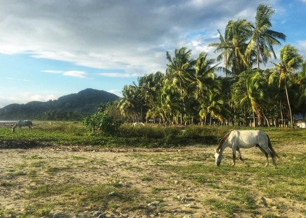 Explore Playa Samara Beach Costa Rica